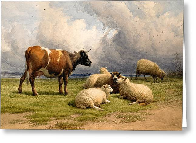 Fine Artworks Greeting Cards - A Cow and Five Sheep Greeting Card by Thomas Sidney Cooper