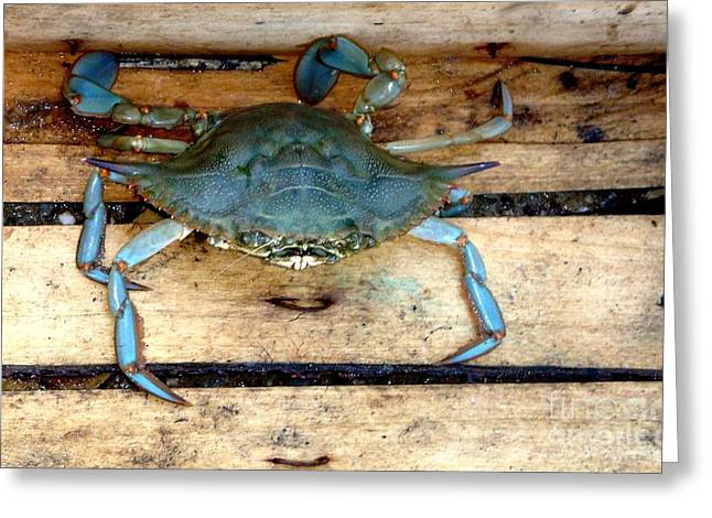 A Crab In A Wooden Box Greeting Card by Olga R