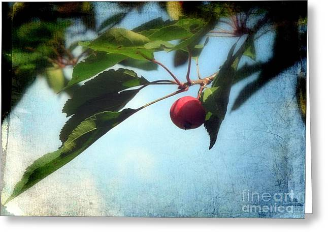 Crabapple Cards Greeting Cards - A Crabapple Greeting Card by Renee Trenholm