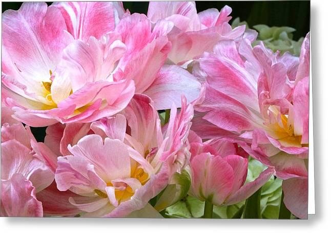 Byron Varvarigos Greeting Cards - A Crowd of Tulips Greeting Card by Byron Varvarigos