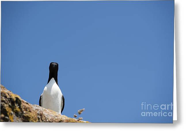 Seabirds Greeting Cards - A Curious Bird Greeting Card by Anne Gilbert