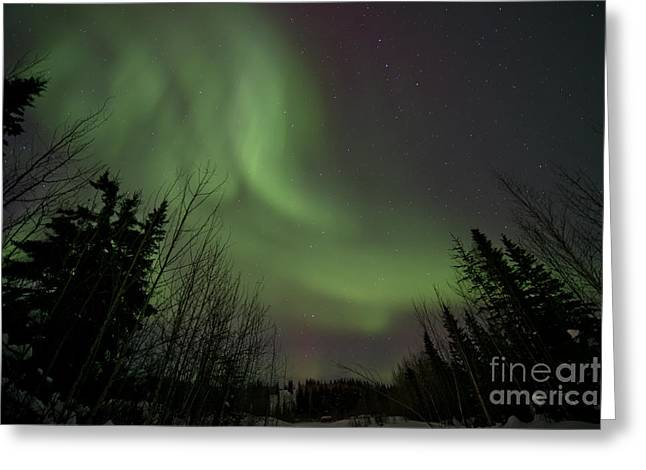 Northern Polar Lights Greeting Cards - A curve of light Greeting Card by Priska Wettstein