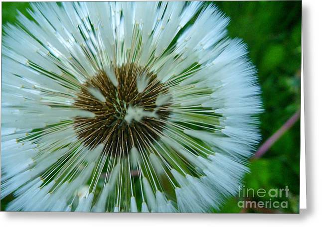 Recently Sold -  - Fishing Creek Greeting Cards - A Dandelion in Alaska Greeting Card by Mary Chiles