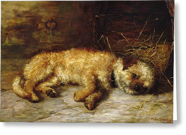 Dog Greeting Cards - A Dandie Dinmont Greeting Card by Philip Eustace Stretton