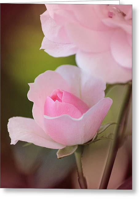 Rose Portrait Greeting Cards - A Daughter is Love Greeting Card by  The Art Of Marilyn Ridoutt-Greene