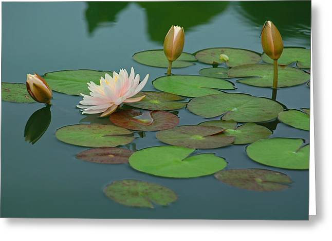 Water Garden Greeting Cards - A Day at the Lily Pond Greeting Card by Suzanne Gaff