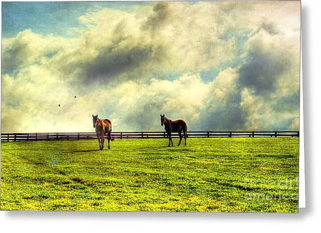 Rustic Photo Greeting Cards - A Day In Kentucky Greeting Card by Darren Fisher