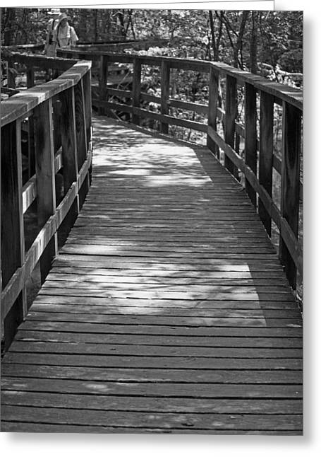Swamp People Greeting Cards - A Day in the Congaree Swamp Greeting Card by Suzanne Gaff