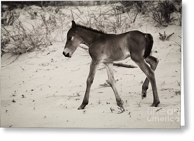 Shadow Horse Studios Greeting Cards - A Day Old Greeting Card by Lyndsey Warren