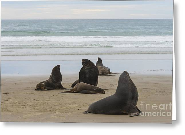 Sea Lions Greeting Cards - A Day On the Beach Greeting Card by Bob Phillips