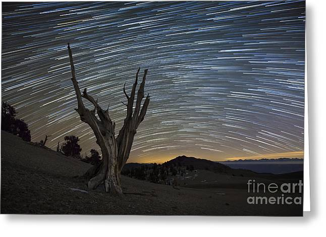 Pinaceae Greeting Cards - A Dead Bristlecone Pine Tree Greeting Card by Dan Barr
