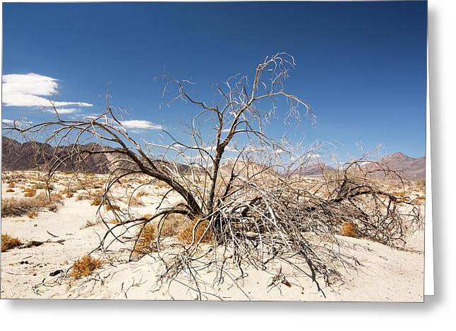 A Dead Bush In The Mojave Desert Greeting Card by Ashley Cooper