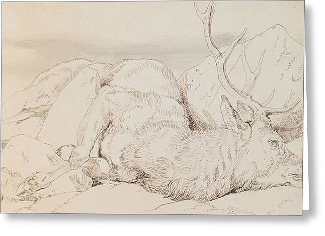 Pen And Paper Drawings Greeting Cards - A Dead Stag Greeting Card by Sir Edwin Landseer