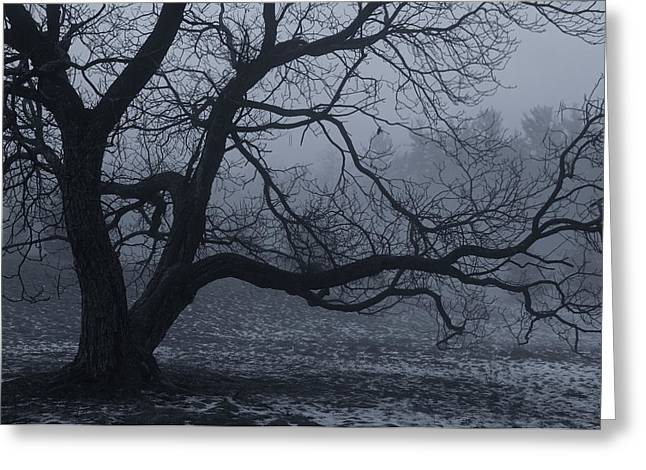 Gnarly Greeting Cards - A Deep Fog Greeting Card by Rachel Cohen