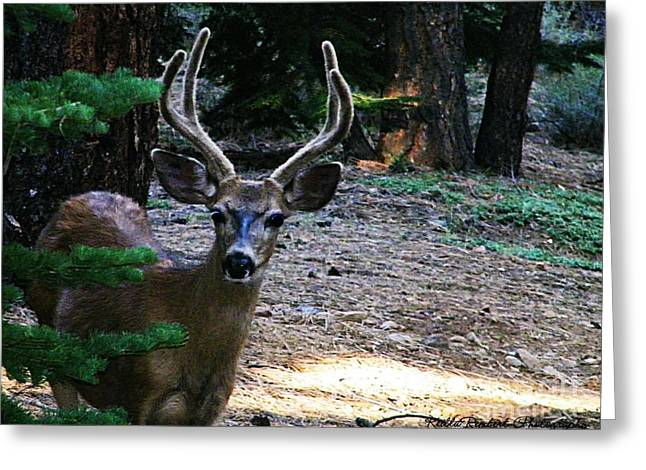 Deer Camp Greeting Cards - A Deer Visitor Greeting Card by Bobbee Rickard