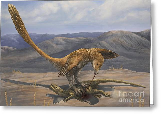 Dromaeosaurid Greeting Cards - A Deinonychus Feeds On The Carcass Greeting Card by Emily Willoughby