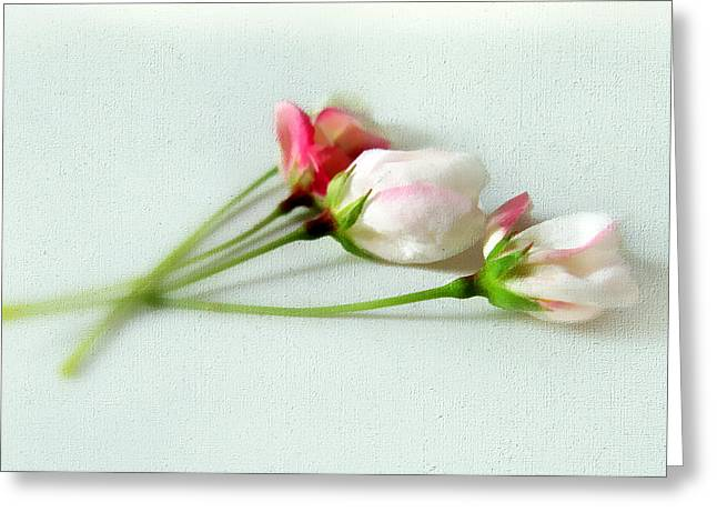 Texture Flower Greeting Cards - A Delicate Bloom Greeting Card by Jessica Jenney