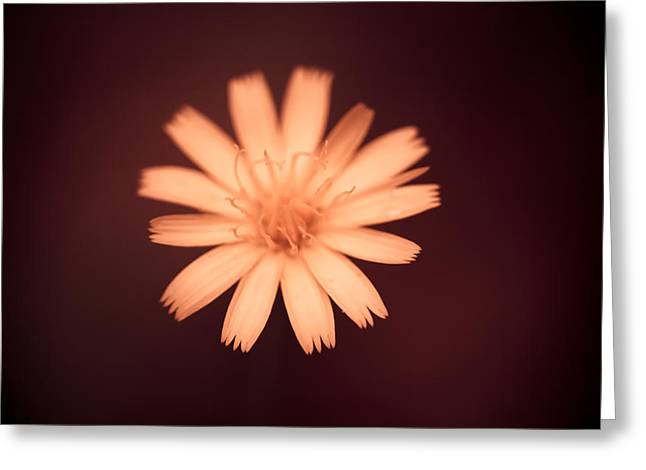 Peach Flower Greeting Cards - A Delicate Flame Greeting Card by Shane Holsclaw