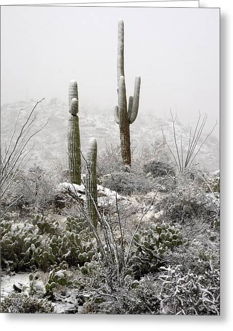 Rincon Greeting Cards - A Desert Snow Day  Greeting Card by Saija  Lehtonen