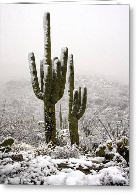 Rincon Greeting Cards - A Desert Southwest Snow Day  Greeting Card by Saija  Lehtonen
