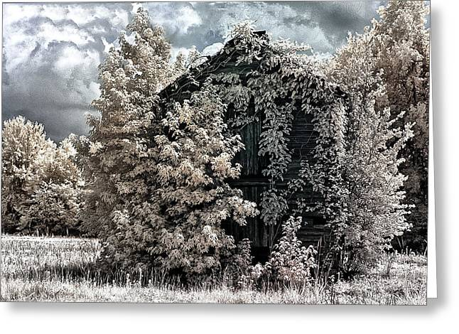 South Carolina Infrared Landscape Greeting Cards - A Different View Greeting Card by Donald Brown