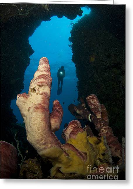 Gorontalo Greeting Cards - A Diver Looks Into A Cavern Greeting Card by Steve Jones