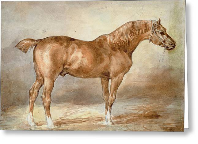 Docking Greeting Cards - A Docked Chestnut Horse Greeting Card by Theodore Gericault