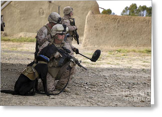 Working Dog Greeting Cards - A Dog Handler Provides Security Greeting Card by Stocktrek Images
