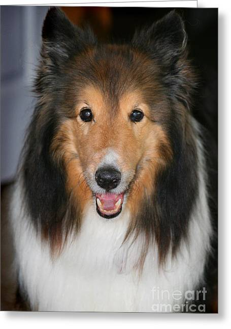 Dad Eyes Greeting Cards - A Dog Named Beau Greeting Card by Karen Adams