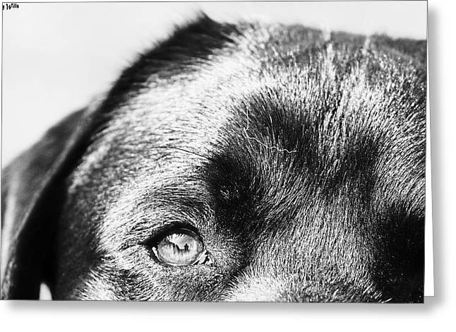 Monochrome Greeting Cards - A Dogs Capture Greeting Card by Johnny Wills