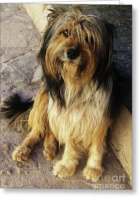 Pictures Of Dogs Greeting Cards - A Dogs Fate Greeting Card by Xueling Zou