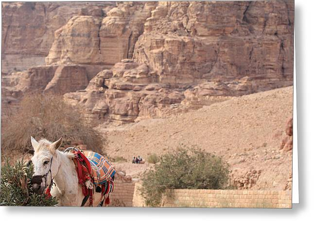 Gcc Greeting Cards - A donkey in Petra Jordan Greeting Card by Ash Sharesomephotos