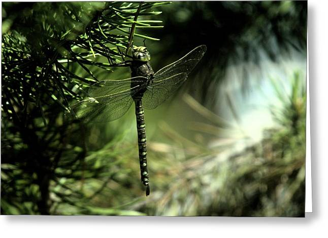 Pine Needles Greeting Cards - A Dragonfly In The Shade Greeting Card by Jeff  Swan