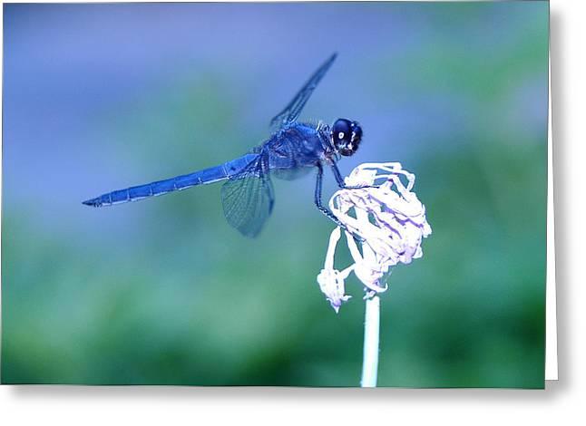 A Dragonfly V Greeting Card by Raymond Salani III