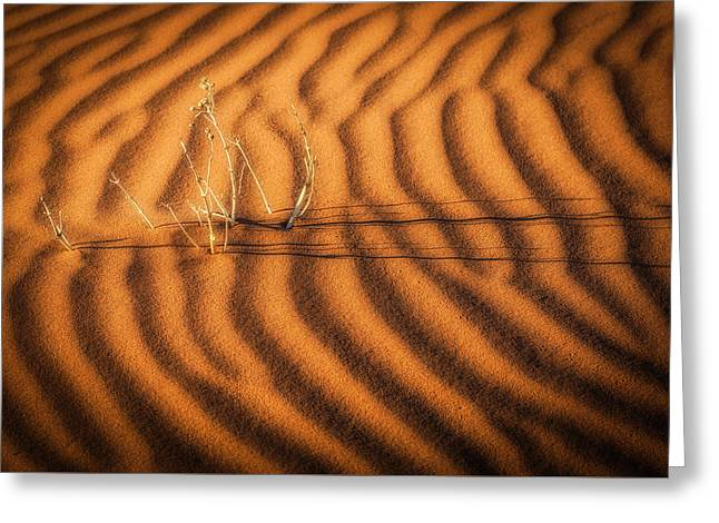 A Dream Of Water - Namibia Sand Dune Photograph Greeting Card by Duane Miller