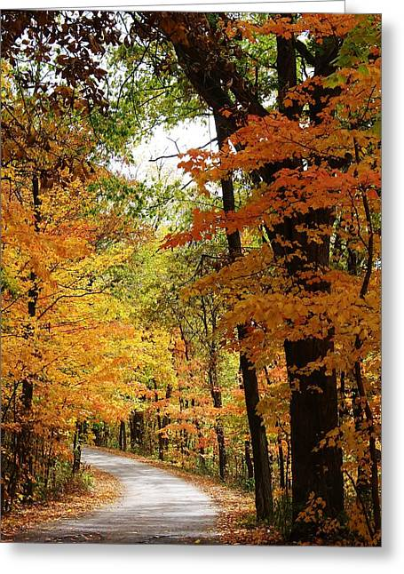 Oregon Illinois Greeting Cards - A Drive through the Woods Greeting Card by Bruce Bley