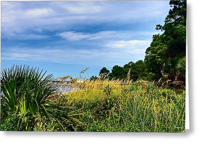 A Drive With A View Greeting Card by Debra Forand