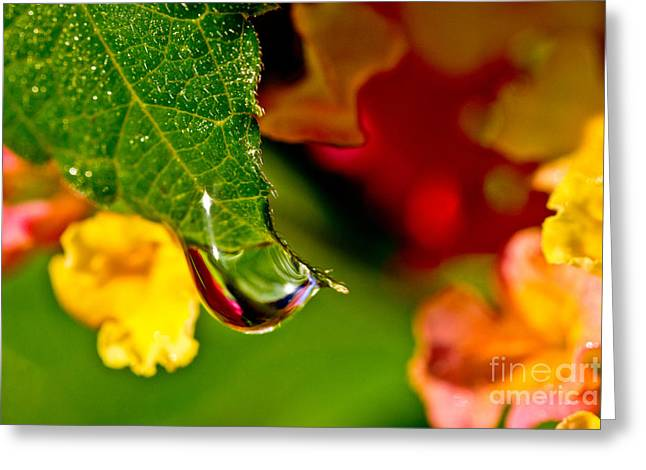 Abstract Rain Greeting Cards - A Drop of Beauty Greeting Card by Tom Gari Gallery-Three-Photography