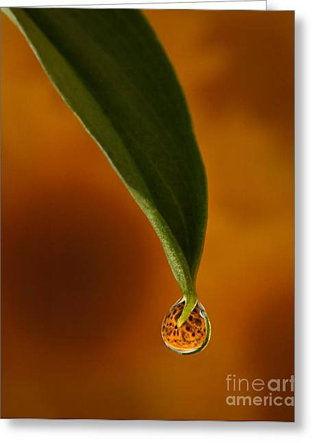Gold Leave Greeting Cards - A drop of Sunshine Greeting Card by Susan Candelario
