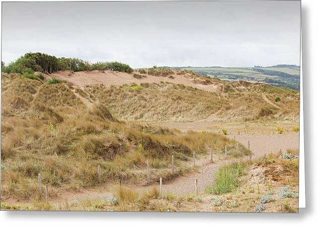 A Dune Restoration Project Greeting Card by Ashley Cooper