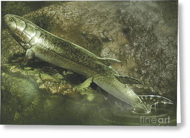 Fish Digital Art Greeting Cards - A Eusthenopteron Fish Crawls Greeting Card by Jan Sovak