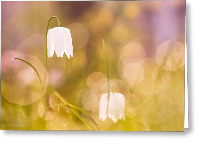 Fritillaria Greeting Cards - A Fairies Place Greeting Card by Roeselien Raimond