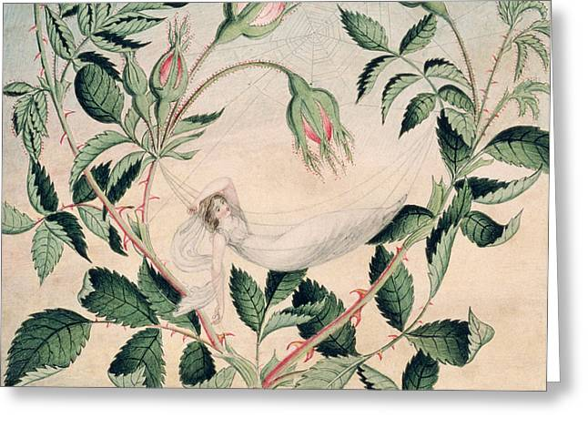 Resting Drawings Greeting Cards - A Fairy Resting In A Hammock Spun Greeting Card by Amelia Jane Murray