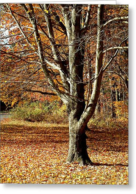 Millbury Greeting Cards - A Fall Tree in New England Greeting Card by Mike McCool