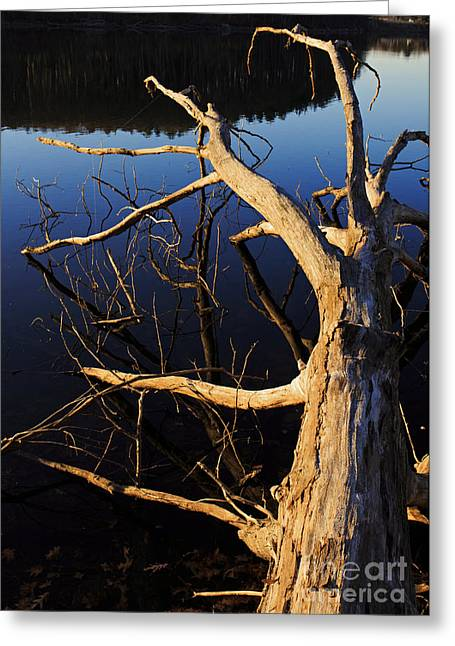 Winter Lake Greeting Cards - A fallen tree beside a lake at sunset Greeting Card by Edward Fielding