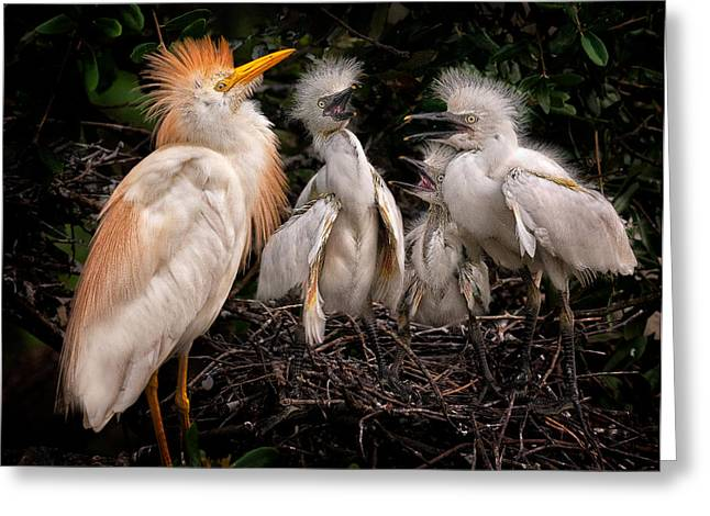 Cattle Egret Greeting Cards - A Family Portrait Greeting Card by Rick Barnard