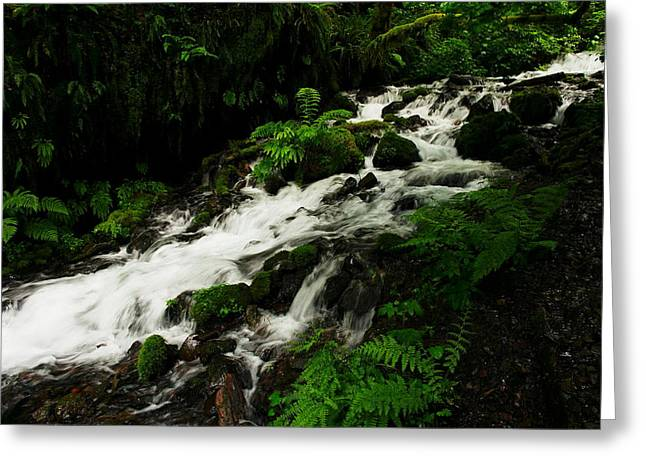 A Fern On An Isalnd  On Wahkeena Creek Greeting Card by Jeff Swan
