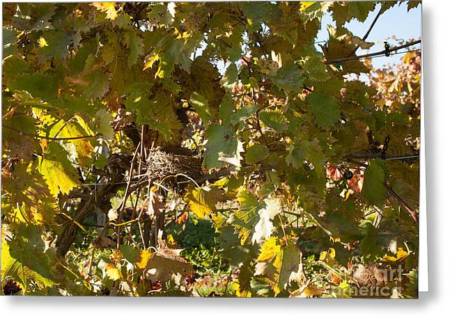 Blue Grapes Greeting Cards - A Few Grapes Left for the Birds Greeting Card by Carol Lynn Coronios