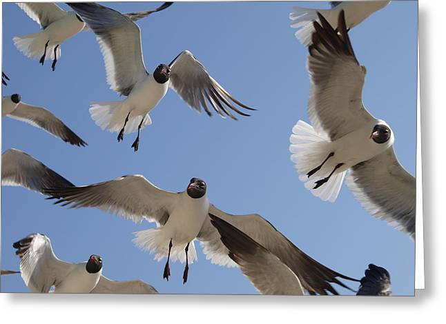 Galveston Greeting Cards - A Few Gulls  Greeting Card by James Granberry