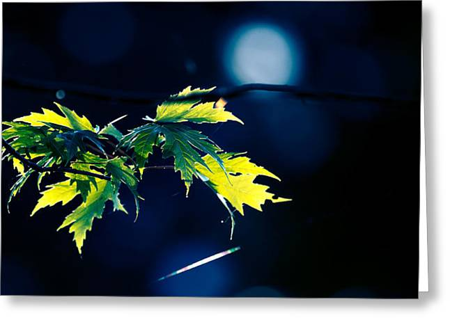 A Few Leaves In The Sun Two Greeting Card by Bob Orsillo